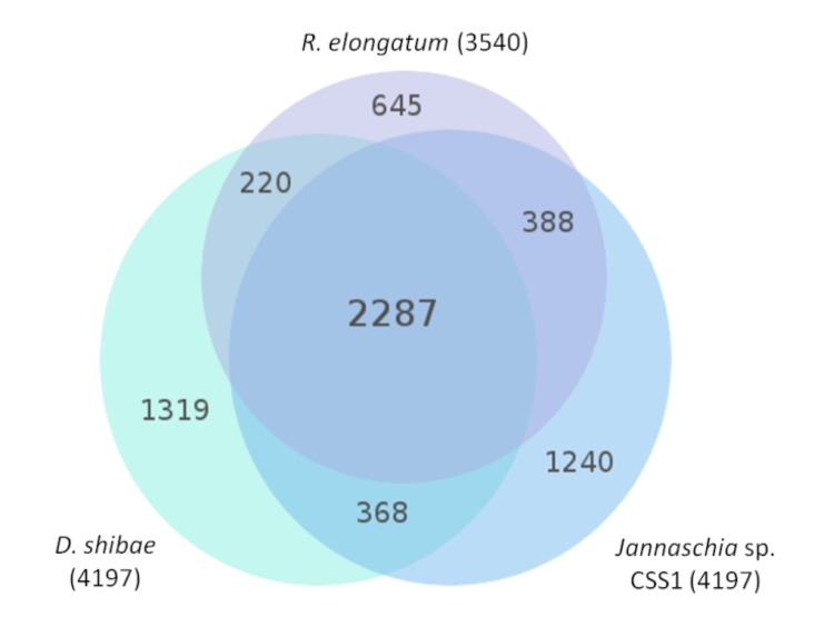 Complete Genome Sequence Of The Bacteriochlorophyll A Containing